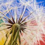 So bunt wie die Pusteblume ist unsere Kreativität